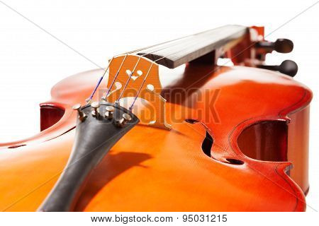 Close-up view of cello body on white background