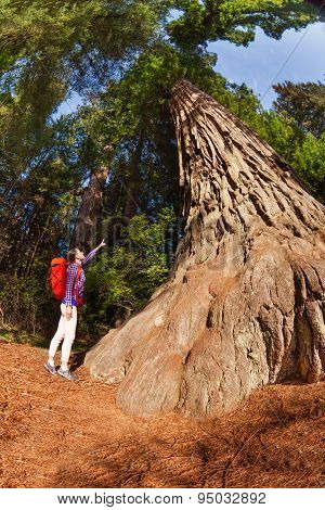 Pointing girl near big tree in Redwood California