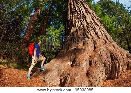 Man stands near big tree in Redwood California