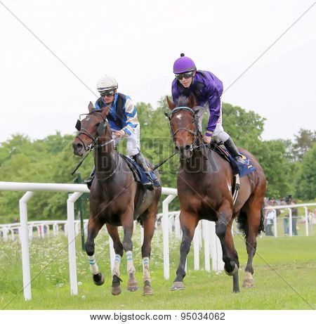 Two Race Horses Close To Each Other