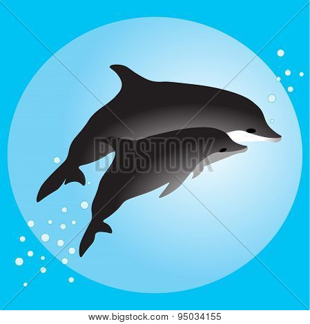 Couple dolphins swimming in the ocean