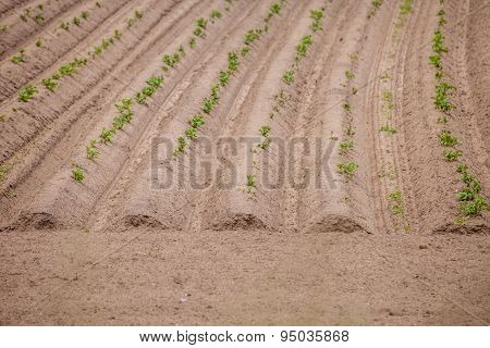 Spring Landscape with Plowed Field on the Background of Beautiful Clouds and Blue Sky. Ploughed Soil