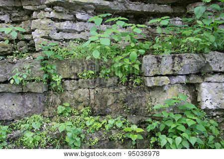Plants On Rock Cliff