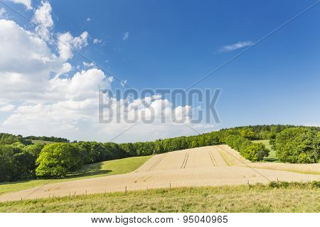 Golden Rye Field And Hill