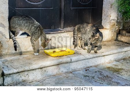 Two Cats Fight For Food In Perast City, Montenegro