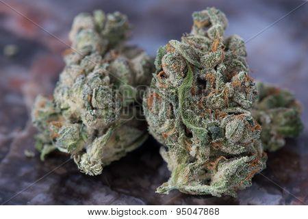 Medicinal Medical Marijuana