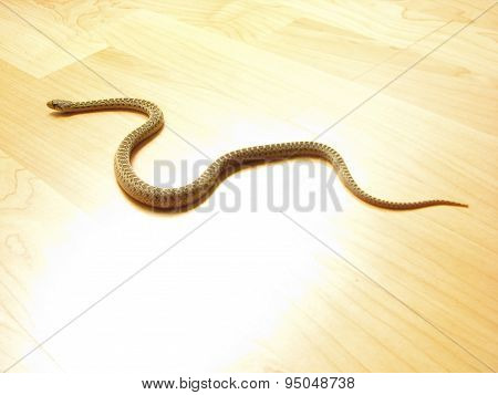 Snake on the floor