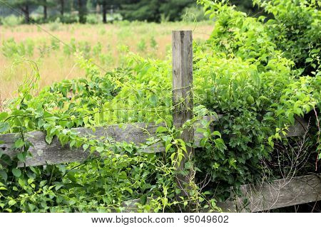 Fenceline And Field
