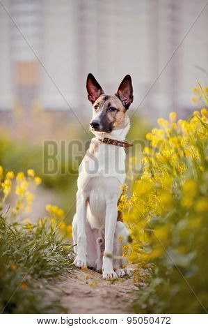 Dog Sits In Yellow Flowers.