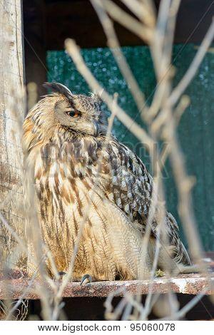 Owl Hiding