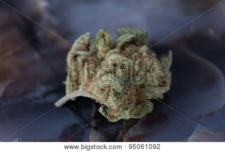 Close up Macro of Deep Sleep Medical Marijuana