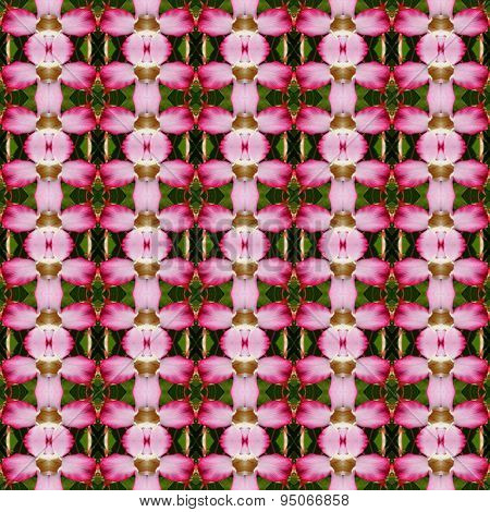 Adenium Flowers Seamless