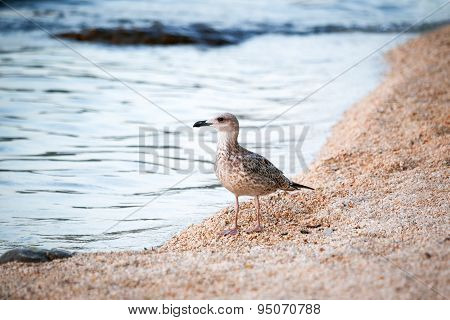 Bird Standing On Shore
