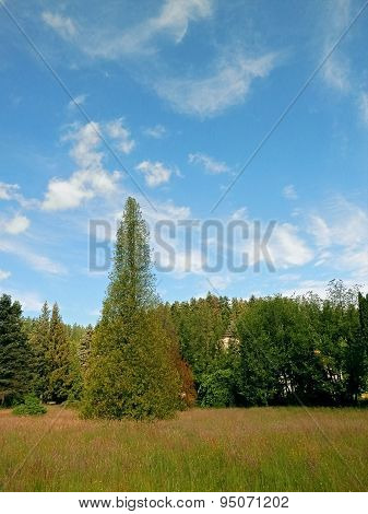 Landscape And Sky During Summer Days.