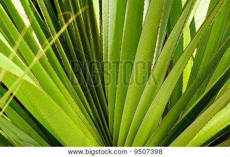 Natural  plant Background