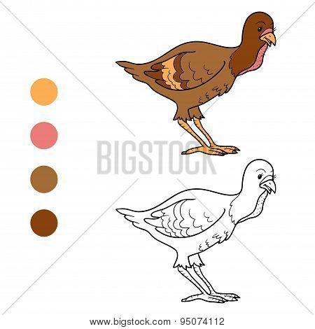 Coloring Book (turkey Chick)