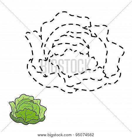 Connect The Dots (cabbage)