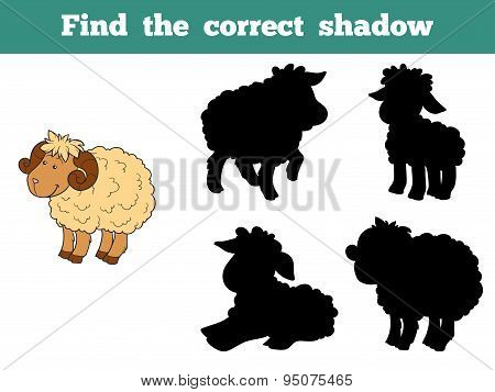 Find The Correct Shadow (sheep Family)