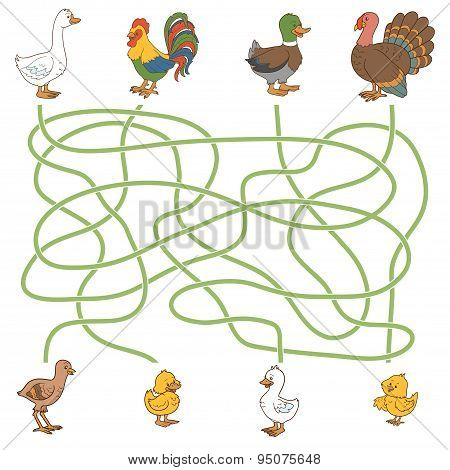 Maze Game: Help The Young Find Their Parents (farm Birds: Duck, Goose, Turkey, Chicken)