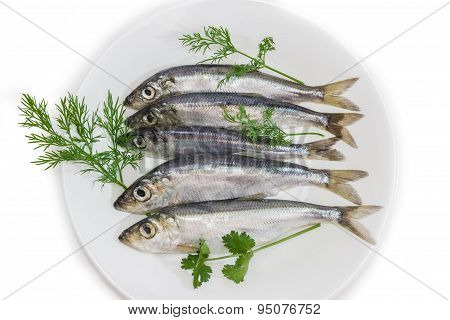 Several Sprats With Dill And Parsley On A Dish