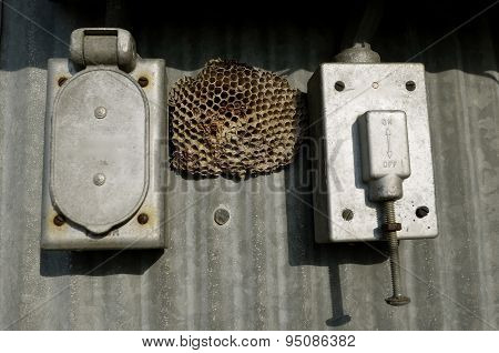 Wasp nest between electric boxes