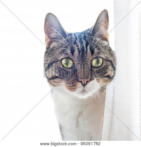 Little Gray Striped Cat