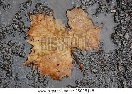 Leaf in water puddle
