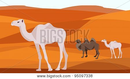 Camel in the desert, sand hills, dunes, animals and nature