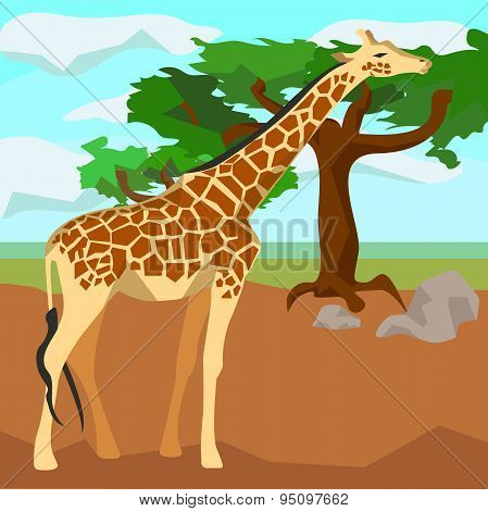 Giraffe on background trees, animals and nature