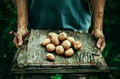 Постер, плакат: Farmer With Potatoes