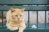 image of tigers-eye  - Tiger colored green eyes cat sitting on a green bench next to a flower - JPG