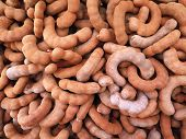 image of tamarind  - closed up the group of tamarind spicy fruit - JPG