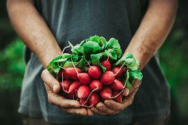 foto of farmer  - Organic vegetables - JPG