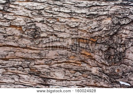 bark texture horizontal natural scenery macro forest