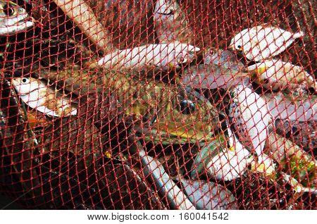 Fish nets full of catch sea fishing