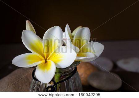 Flower Yellow White Plumeria Or Frangipani In Glass Vase