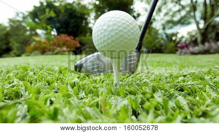 Golf ball on a tee with a driver in the background