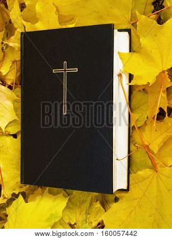 Bible. Holy bible with fall maple leaves