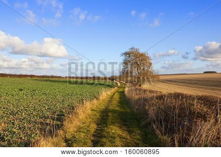 Agriculture And Bridleway