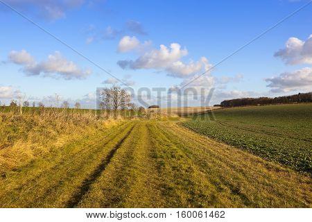 Bridleway And Canola Crop