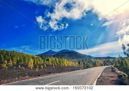 Volcano El Teide, Tenerife National Park. Pine Forest And Road Across Lava Rocks In El Teide Nationa