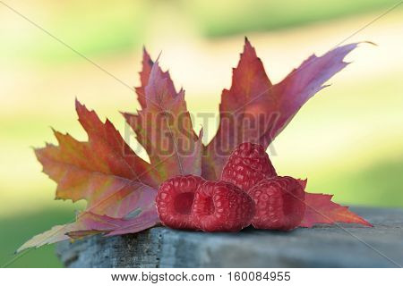 Close-up image of raspberries and maple leaf