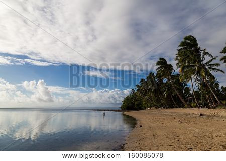 Tropical island paradise - palm trees and sandy beach on the ocean. White clouds are reflected on the surface of water. Human walks on water. Fijii isle Beqa