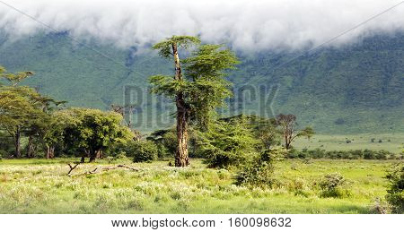Primordial beauty of nature is in the valley of Ngorongoro Crater Conservation Area, Tanzania. East Africa