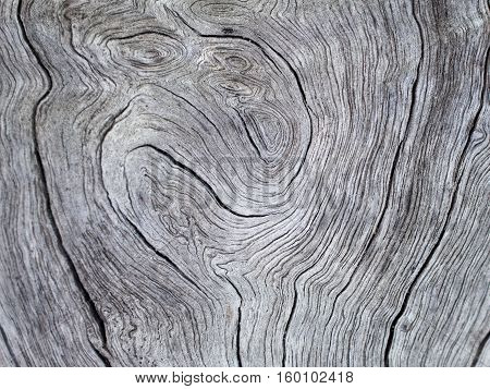 Wood texture with curves greyscale photo. Gray timber board with weathered crack lines. Natural background for shabby chic design. Grey wooden floor image.
