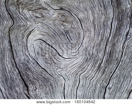 Obsolete wood texture with curves photo. Gray timber board with weathered crack lines. Natural background for shabby chic design. Grey wooden floor image.