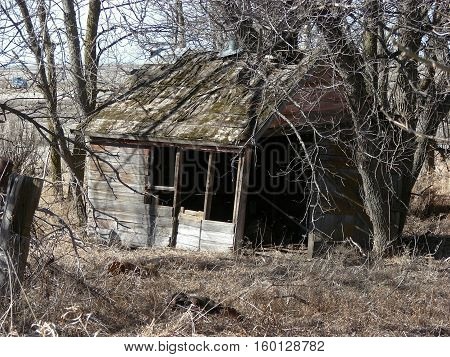 An abandoned old building surrounded by overgrown trees. May of been used for a chicken coop on a now abandoned farmstead.