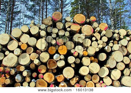 Stacked Deciduous Wood in Forest, Horizontal View