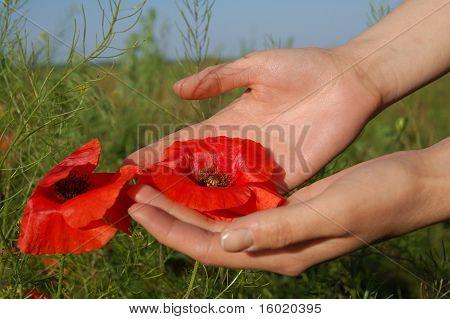 Poppy On Hands