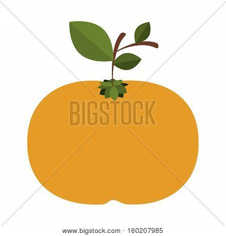 silhouette colorful of tangerine fruit with stem and leafs vector illustration